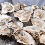 牡蠣の生食用と加熱用の違いは?イカの刺身の消費期限に注目!