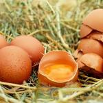 生卵の賞味期限はどのくらい?冷蔵庫に保存すると長持ちする