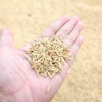お米の賞味期限が2年って本当?