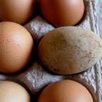 生卵の賞味期限が1週間から10日過ぎてしまったときは