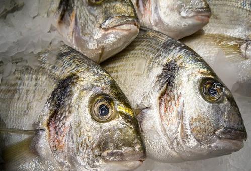 賞味期限 生 鯛