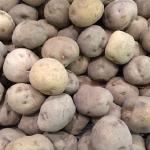ジャガイモの賞味期限目安