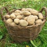 ジャガイモの賞味期限。緑色の場合