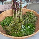 山菜の水煮の賞味期限はどれくらい?