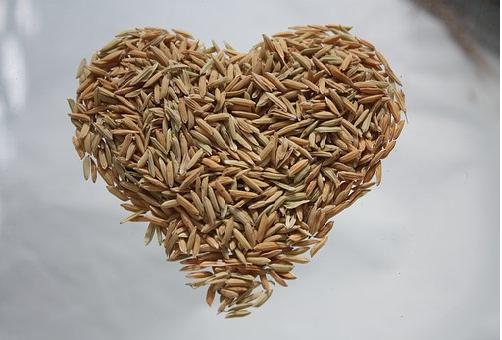 賞味期限 未開封 もち米 玄米 無洗米