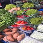 さつまいもは野菜なのか?違うのか?さつまいもの賞味期限や保存法は?