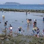 潮干狩りで獲った貝の賞味期限。あさりとはまぐりの場合は?