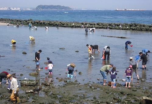 賞味期限 潮干狩り あさり 貝 はまぐり