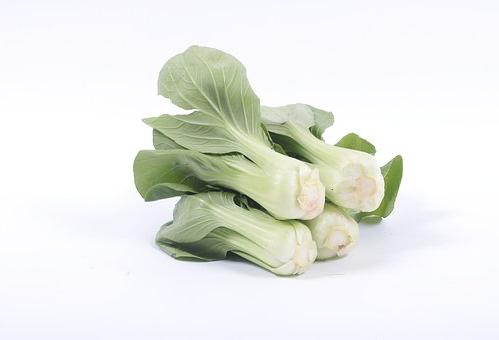 賞味期限 チンゲン菜 常温 冷蔵 冷凍