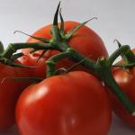 見た目や臭いで賞味期限を判断!ぶよぶよで柔らかいトマトはまだ大丈夫?