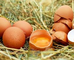 賞味期限 卵 見た目 柔らかい