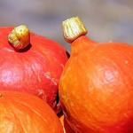 かぼちゃの賞味期限は?白いのはカビなの?