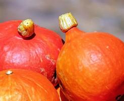 賞味期限 かぼちゃ 白い カビ
